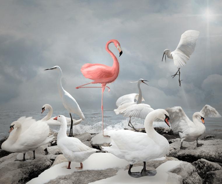 pink-flamingo-among-variety-of-white-birds