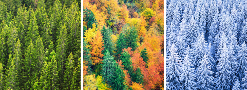 image of trees in different seasons illustrating constant change