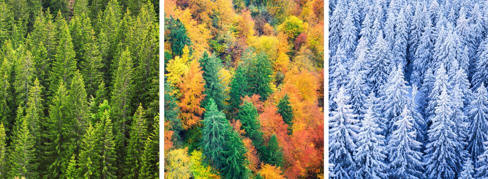 Im Wandel der Zeit: Bäume in verschiedenen Jahreszeiten